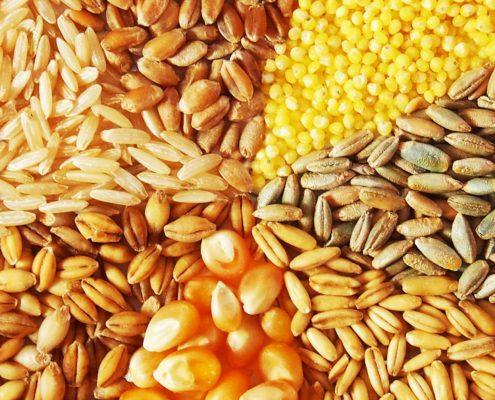 Getreide im Überblick