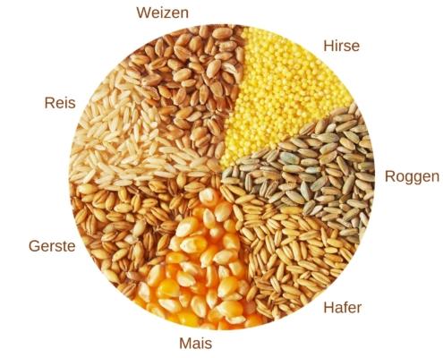 Getreidearten MixDeinBrot